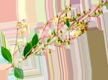 東大泉のIPMヘナ専門美容室 瑠璃 Ruri